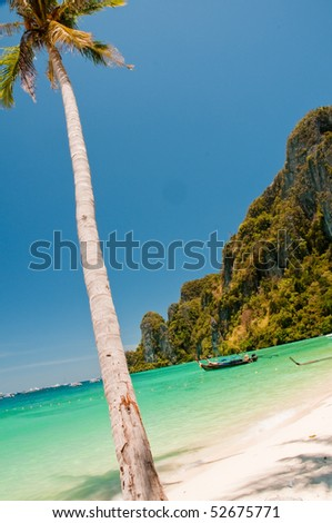 Coconut tree stretching out to sea