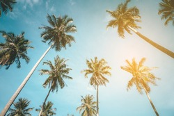 Coconut trees against blue sky, perspective view. Low angle shot image of group of tropical palm tree.