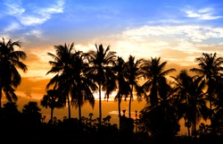 Coconut trees and sun set