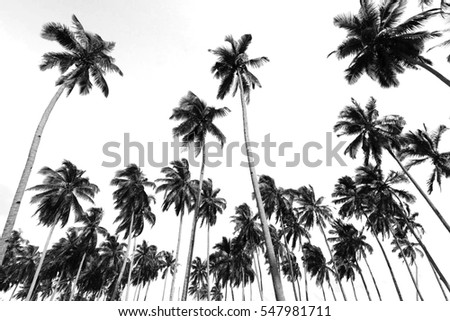 Coconut Trees At Tropical Beach With Black And White Background