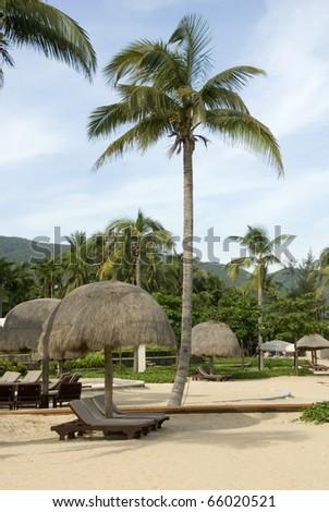Coconut trees, beach, leisure chair.