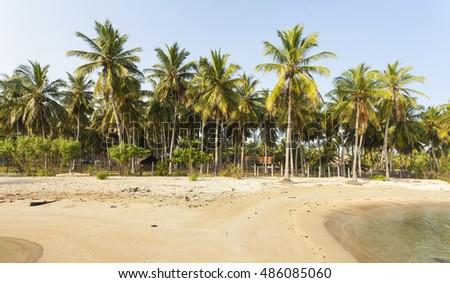 coconut trees farm in Sri Lanka #486085060