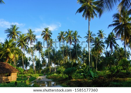 Coconut trees on the Mafia island provides livelihood for the islanders.