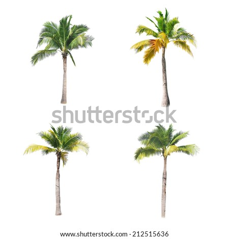 coconut trees on white background  - Shutterstock ID 212515636
