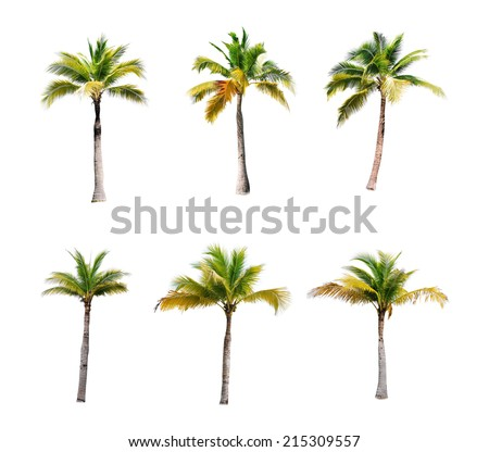 coconut trees on white background  - Shutterstock ID 215309557