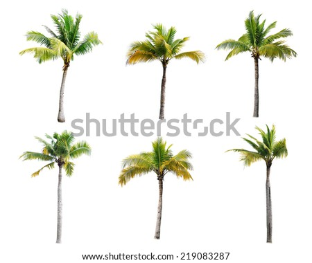 coconut trees on white background  - Shutterstock ID 219083287