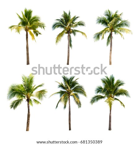 Coconut trees on white background   - Shutterstock ID 681350389