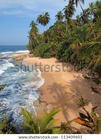 Coconut trees shade on the sand of an unspoiled beach