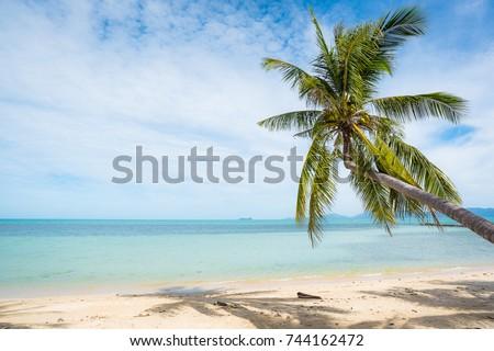 Coconut trees stretch into the sea #744162472