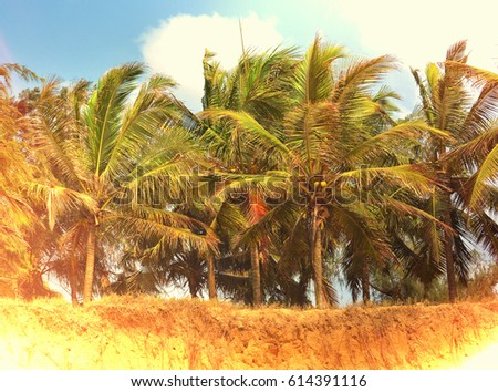 Coconut trees with blue sky in background. Sunlight. Old photo. Vintage. Beautiful landscape. Secluded beach with palm trees. Stunning African nature.