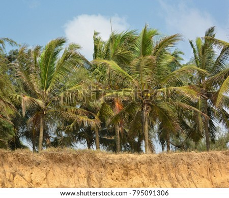 Coconut trees with blue sky in the background. Beautiful landscape. Secluded beach with palm trees. Stunning African nature.
