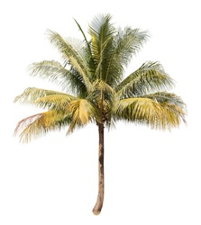 Coconut white background