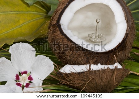 Coconut with water splash