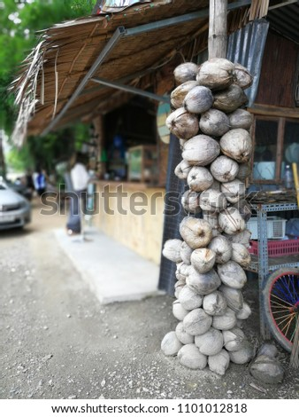 Coconuts matured as dry brown. Asian people use to make ice cream or make food such as curry, tasty, aromatic or aromatic oil. An inexpensive good herb. #1101012818