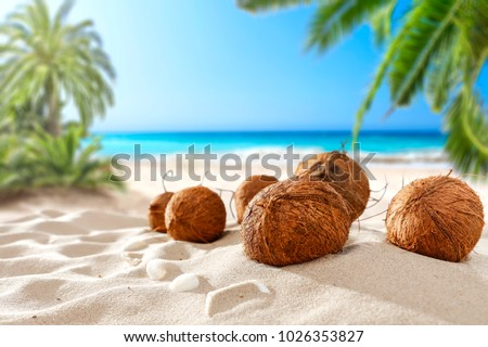 coconuts on the beach with a place for milk or cream  #1026353827