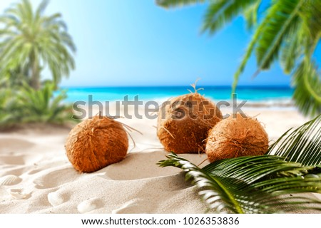 coconuts on the beach with a place for milk or cream  #1026353836