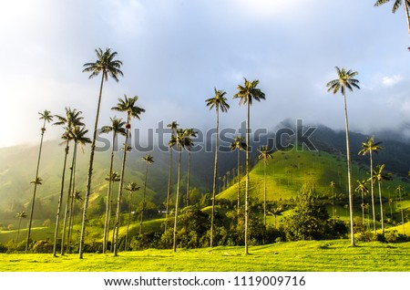 Cocora Valley in Colombia Stock fotó ©