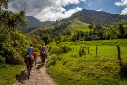 Cocora valley trail in colombia