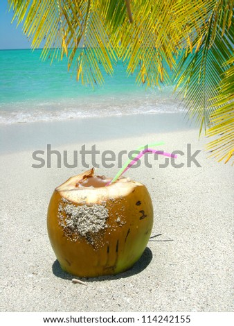 Cocunut with straws on a  beautiful Caribbean beach shoreline  with palm tree - stock photo