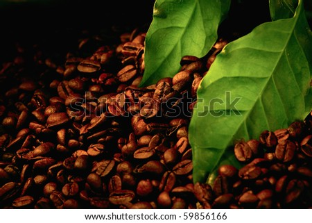 coffee beans and green leaf close-up
