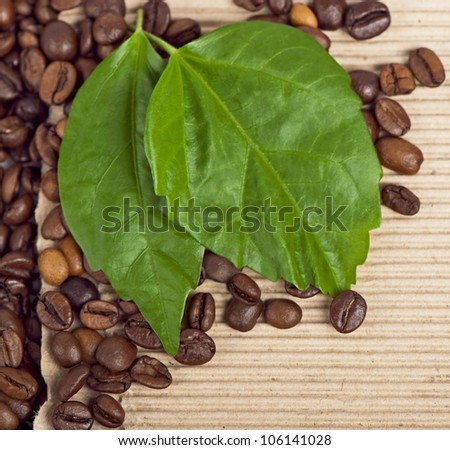 coffee beans and green leaf on the old paper close-up
