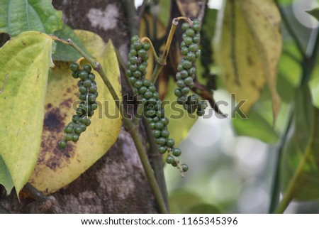 Coffee Beans, Holidays, South India