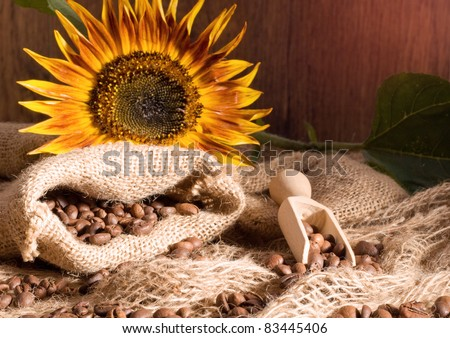Coffee beans in canvas sack and sunflower
