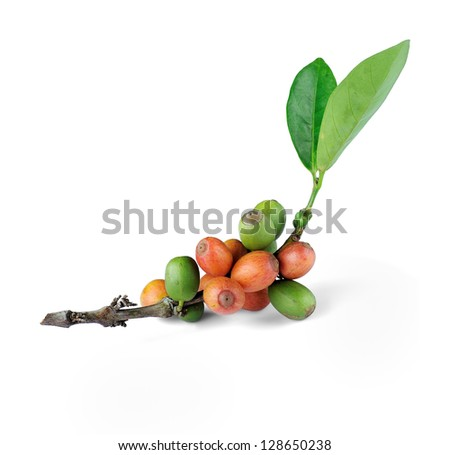Coffee beans isolated on white background, selective focus.