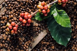 Coffee beans on coffee green leaves on wooden background, Fresh coffee beans on wooden background