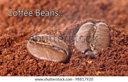 Coffee beans on the background of ground coffee