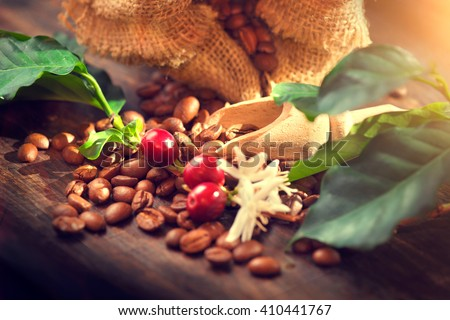 Coffee beans with real coffee fruits, flowers and leaves on wooden table close up. Red coffee beans and flower on a branch of coffee tree