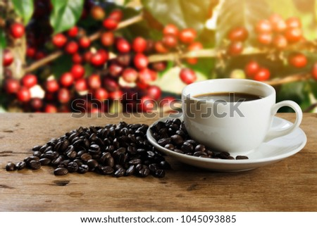 Coffee cup and coffee bean on rustic wooden table on blurred coffee tree background with copy space. Relaxing time with coffee in the morning concept. #1045093885
