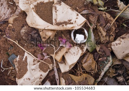 Coffee Filter, an Egg Shell and a Flower on domestic Compost