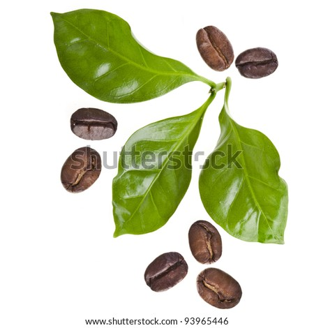 coffee grains and leaves of coffee trees surface top view sign close up  isolated on white - stock photo