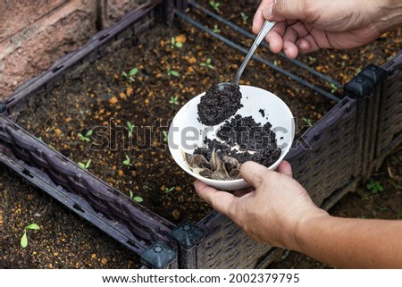 Coffee grounds being added to baby vegetables plant as natural organic fertilizer rich in nitrogen for growth Photo stock ©