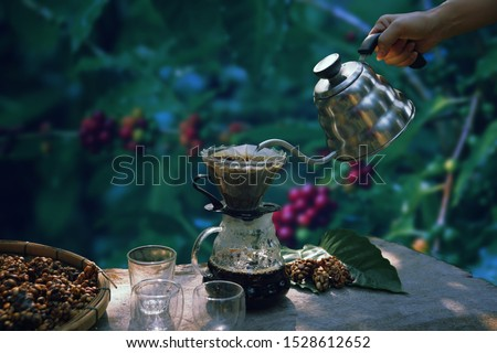 Coffee makers making coffee,drift,roasted coffee beans, hot drink,popular beverage around the world, Musk coffee,The image of coffee maker with fresh coffee beans background and  leave