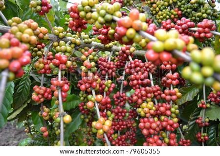 Coffee - multiples