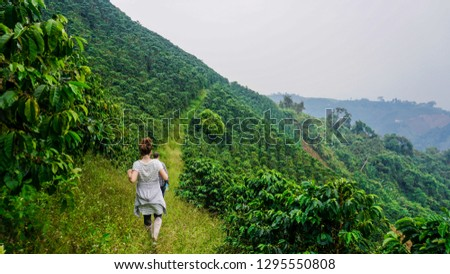 Coffee plant farmer and field harvest, woman walking through arabica coffee plantation in Colombia