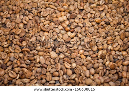 coffee seed texture  produced by musk at Bali Indonesia, animal coffee