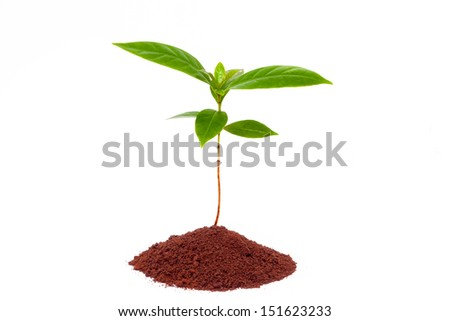coffee sprout  growing from coffee grounds isolated on white background