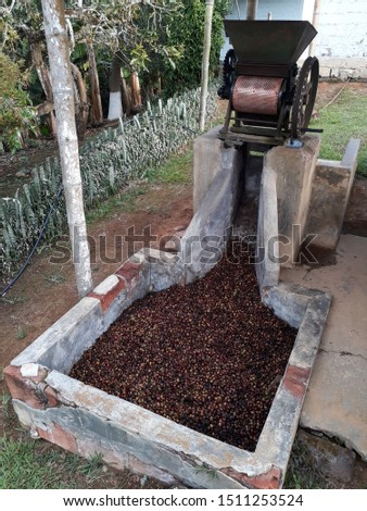 Coffee thresher machine for stripping Colombian coffee manual #1511253524