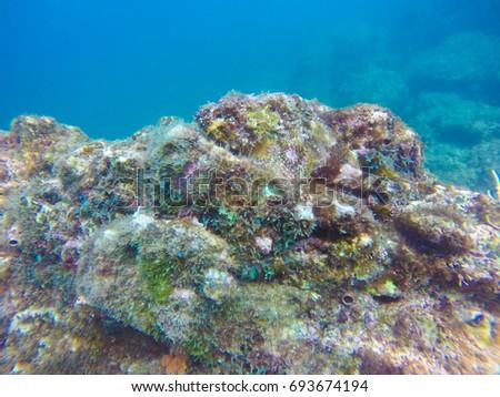 Coiba Diving UNESCO Site in Panama