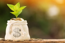 Coin in the money bag and plant growing with savings money put on the wood in the morning sunlight, Business investment and saving growth concept.