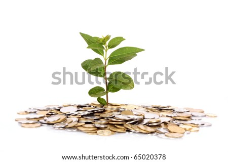 coin money with green leaf growingcoin money with green leaf growing - stock photo