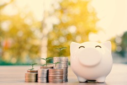 coin piggy bank and green plant in wood and tree bokeh background.color of vintage tone concept save money