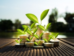 Coin stack in business growth concept with nature background, banking concept