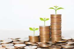 coin stack money saving concept. green leaf plant growth on rows of coin on white background. money matters tips to investment and business financial banking for Financial Wellness.