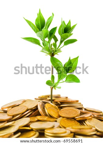 Coins and plant isolated on white background