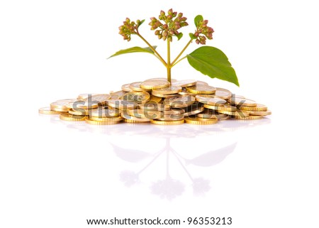 Coins and plant, isolated over white background