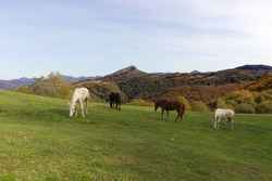 Col de Lizarrietta at the Franco-Spanish fountain with a view of the Pyrenees and beautiful horses